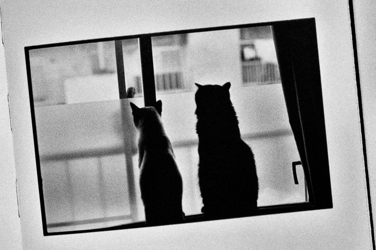 Wonderful Days © Masahisa Fukase